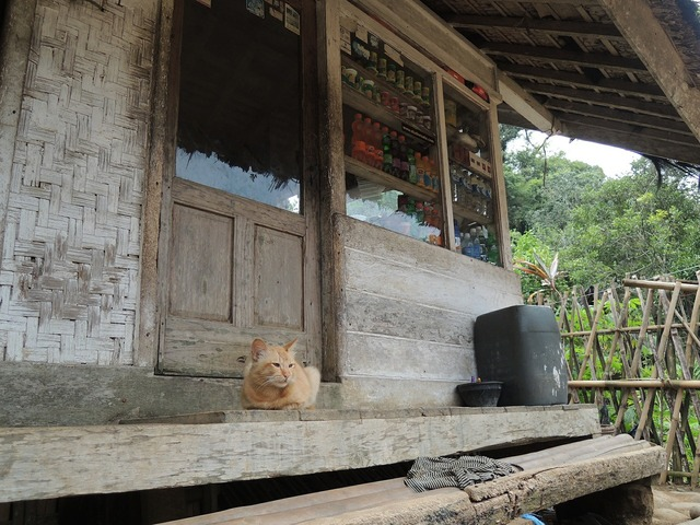 Indonesia cat countryside, animals.