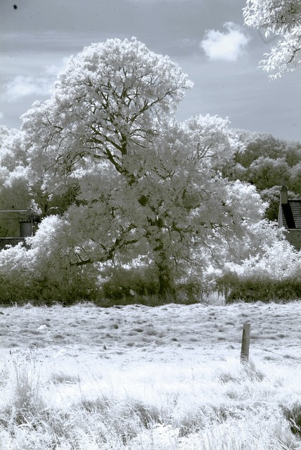 Infrared tree landscape, nature landscapes.