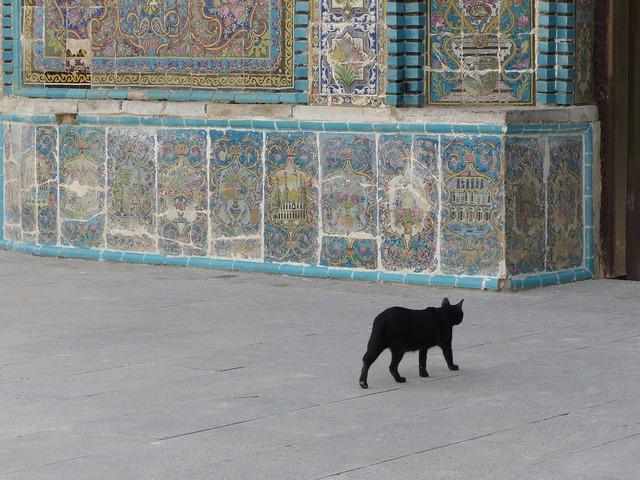 Iran cat black, animals.