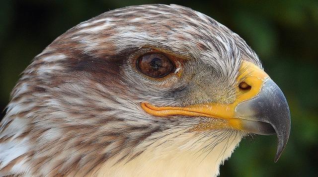 Is bird feather molt adler, nature landscapes.