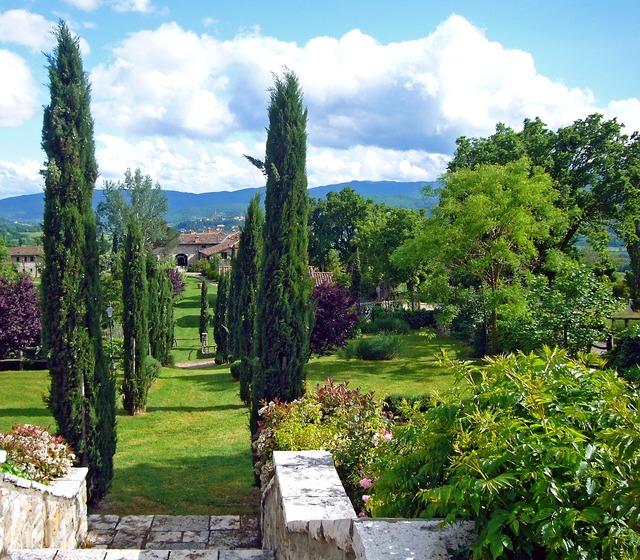Italy tuscany cypress.