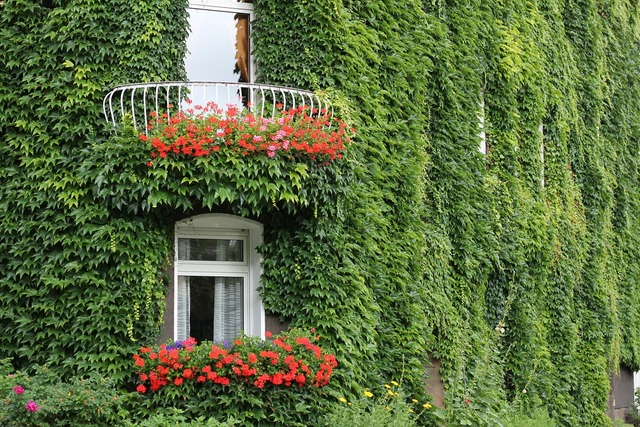 Ivy facade ivy leaf, architecture buildings.
