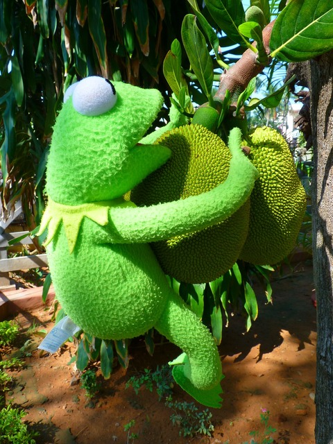 Jack fruit green, food drink.