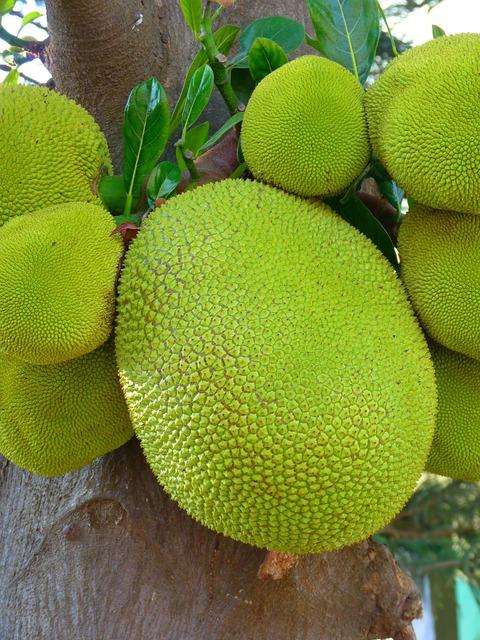 Jack jackfrucht green large, food drink.