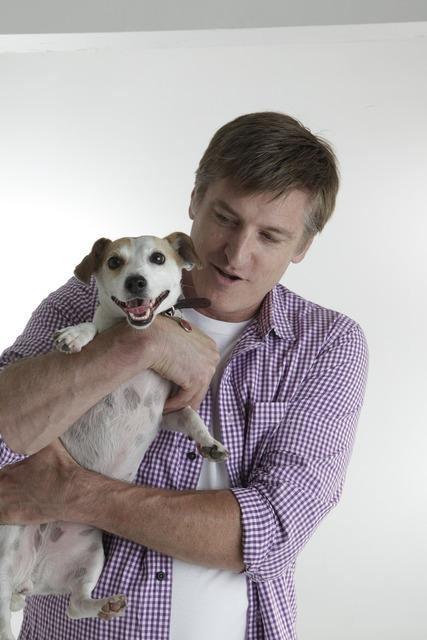 Jack russell pet dog, animals.
