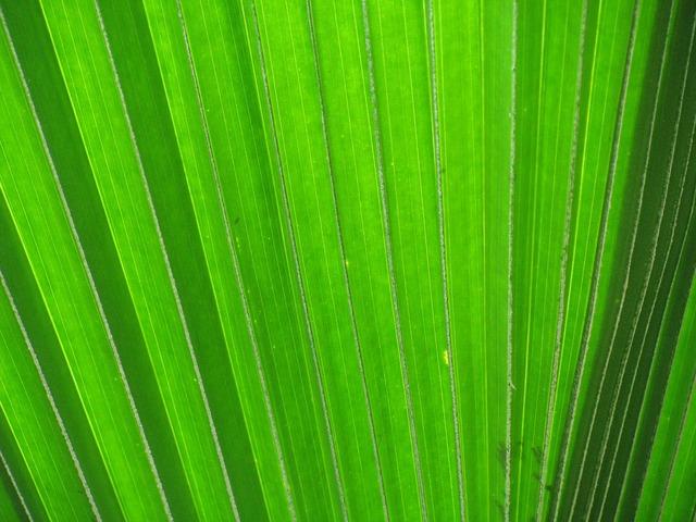 James leaf palm fronds, backgrounds textures.