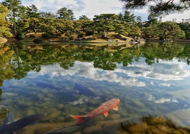 Japan japanese garden.