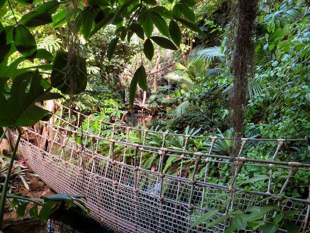 Jungle suspension bridge plant, nature landscapes.