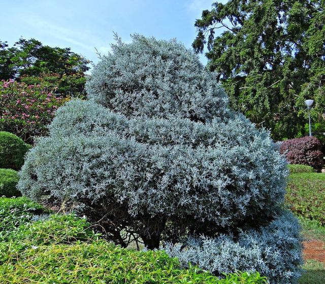 Juniper botanical garden trees.