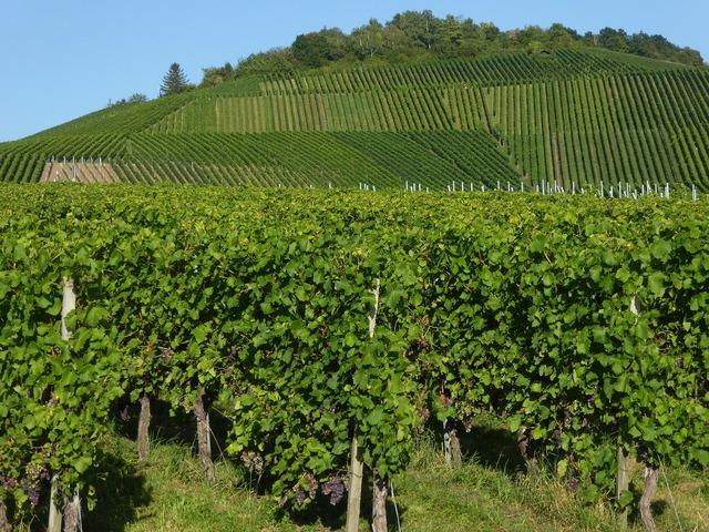 Kappel mountain wine fellbach.