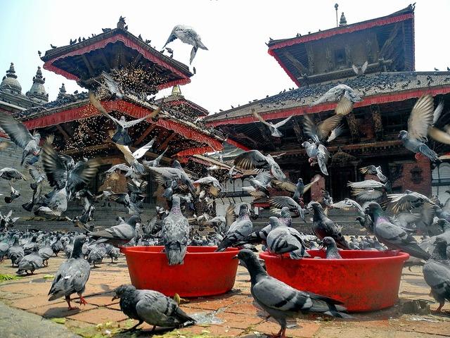Kathmandu nepal birds, religion.