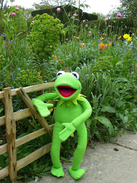 Kermit frog garden.