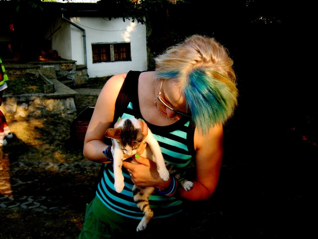 Kitten blue hair cat, animals.