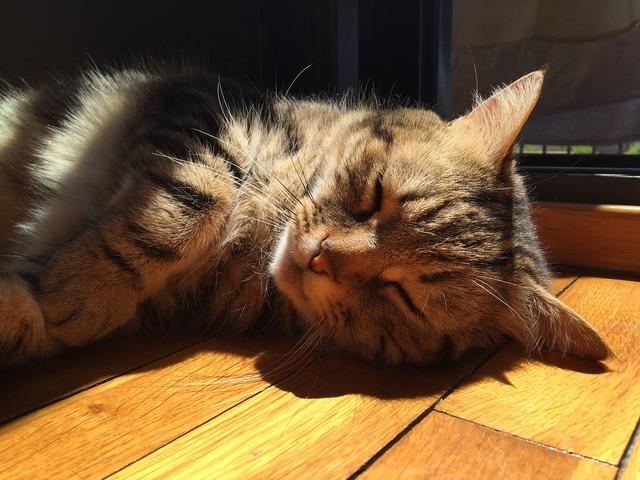 Kitten brindle pet, animals.
