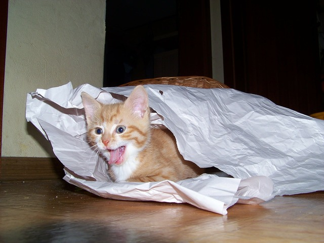 Kitten cat adidas, animals.