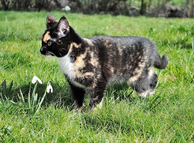 Kitten cat domestic cat, animals.