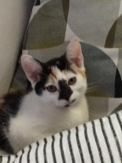 Kitten cushion stripes, animals.