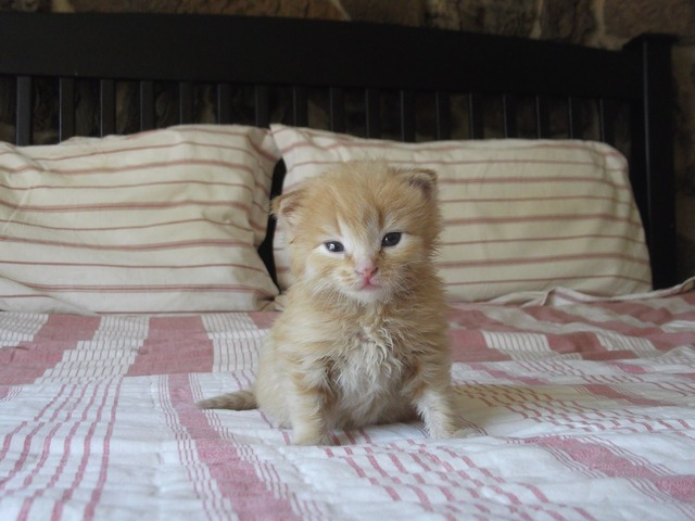 Kitten cute cat, animals.