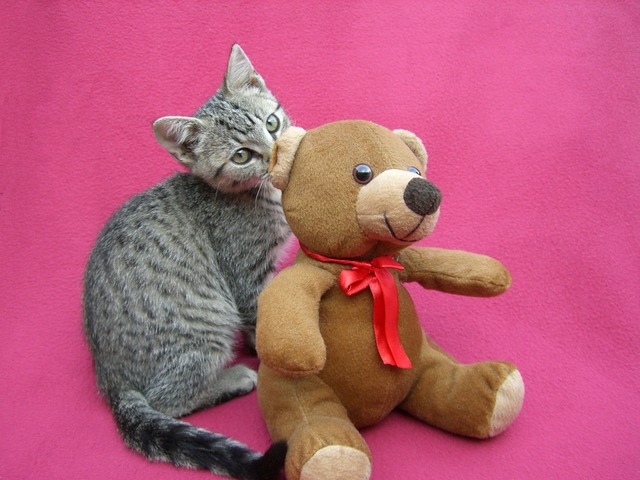 Kitten playing teddy bear, animals.