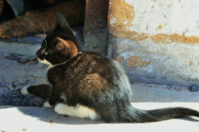 Kitten small cat, animals.