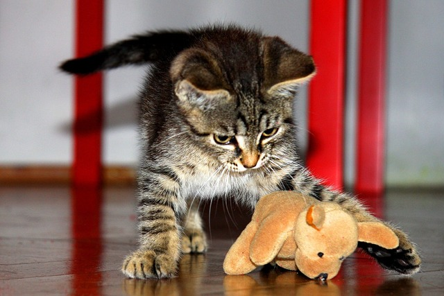 Kitten toy tomcat, animals.