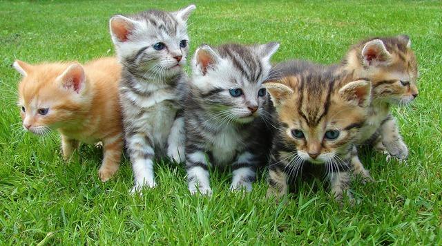 Kittens cat cat puppy, animals.