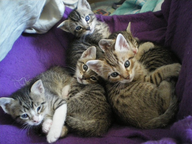 Kittens eyes cat, animals.