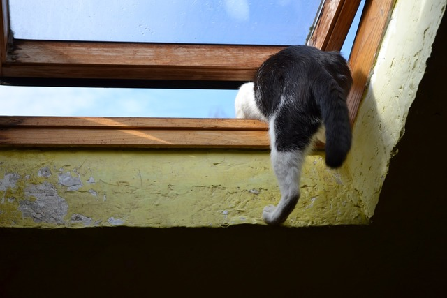 Kot climbs through the window out, animals.