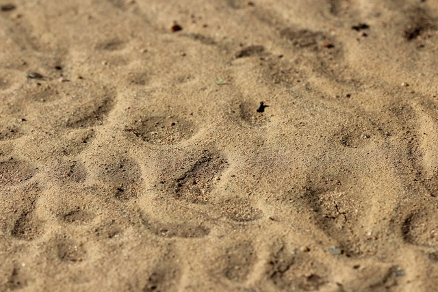 Kruger fate sand, travel vacation.