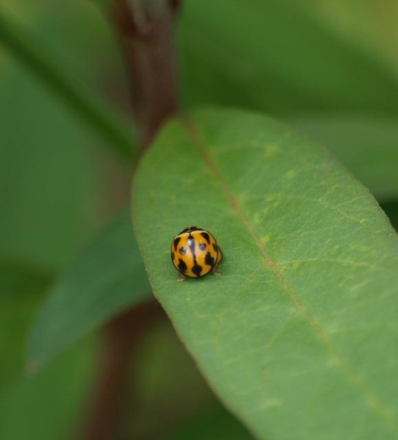 Ladybug bug insect, animals.