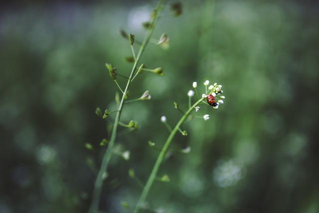 Ladybug plant green, nature landscapes.