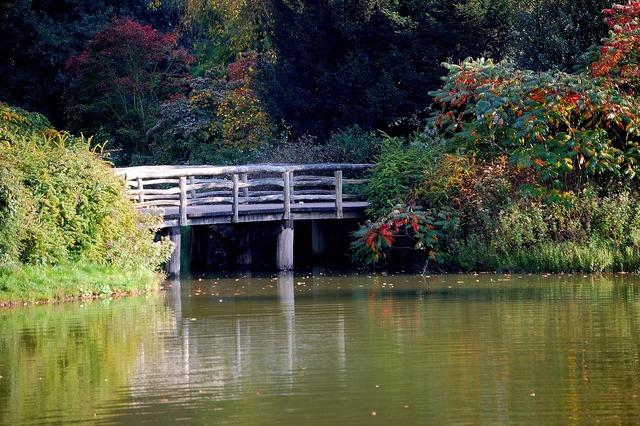 Lake brück autumn forest.