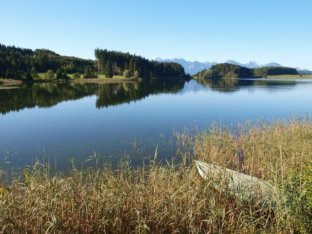 Lake forggensee water bank, nature landscapes.