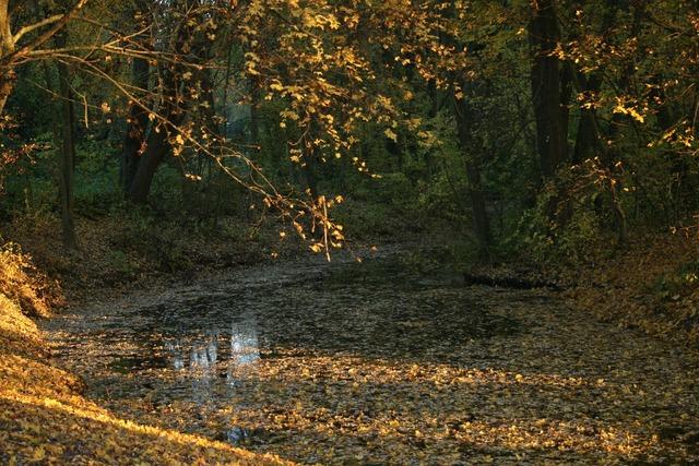Lake leaves autumn, nature landscapes.