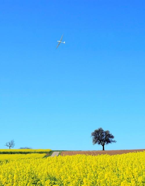 Landscape field of rapeseeds nature, nature landscapes.