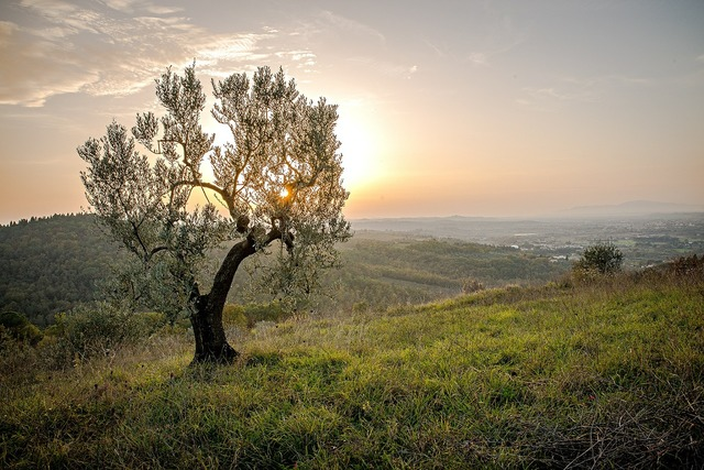 Landscape tree sunset, nature landscapes.