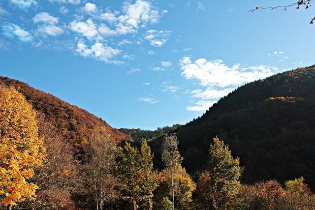 Landscape trees autumn, nature landscapes.