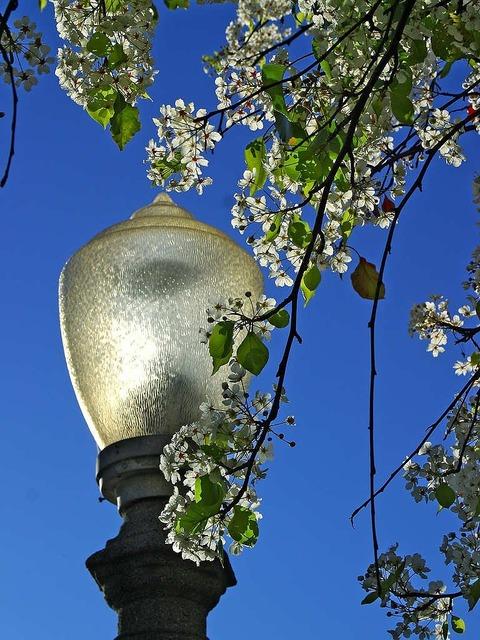 Lantern park tree.