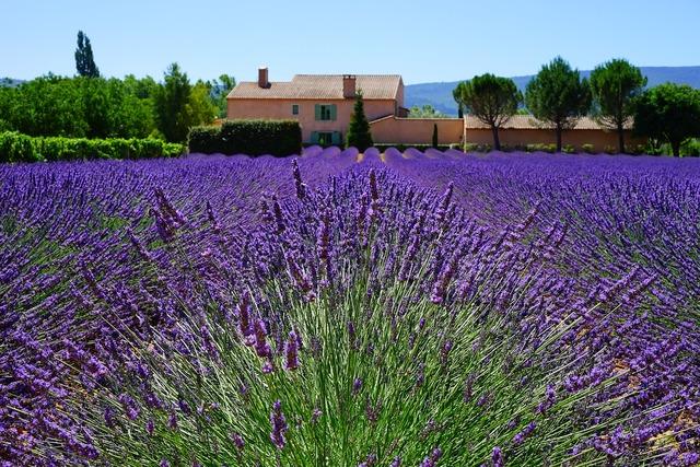 Lavender estate property, nature landscapes.