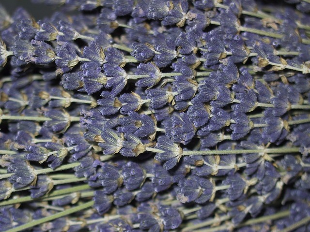 Lavender flowers lavender flowers.