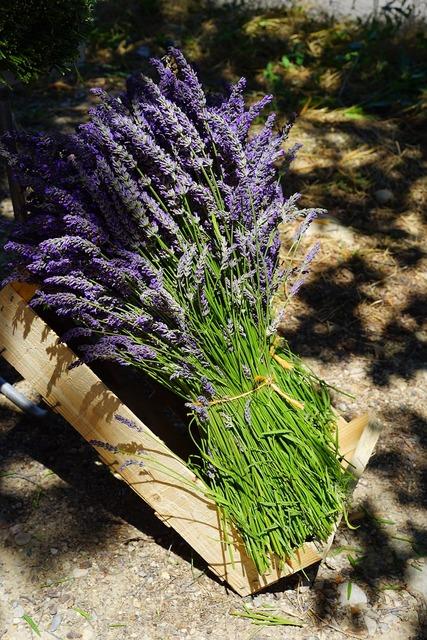 Lavender tufts sale, nature landscapes.