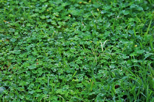 Lawn grass green.