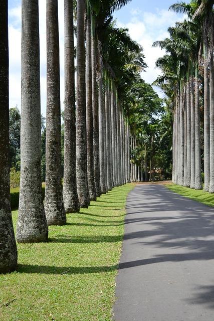Leading lines trees tall trees, transportation traffic.
