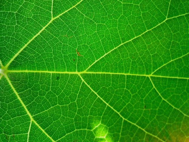 Leaf bright veined, nature landscapes.