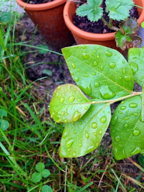 Leaf drop green, nature landscapes.