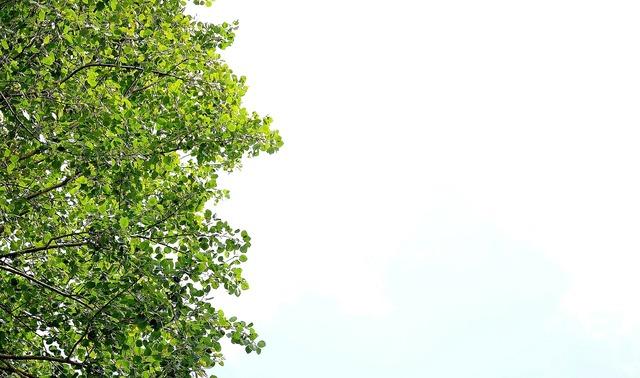 Leaf green leaf green, nature landscapes.
