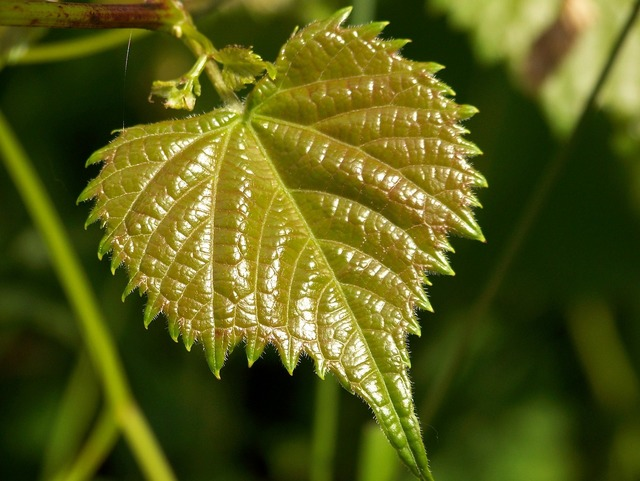 Leaf green new, nature landscapes.