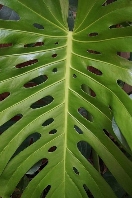 Leaf green p, nature landscapes.