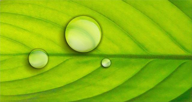 Leaf green plant, nature landscapes.