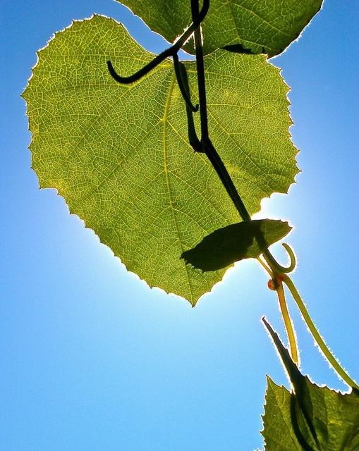 Leaf green solar.